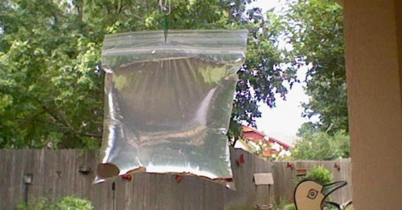 Как обычный пакет с водой разгоняет надоедливых мух